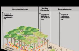 Professor da UEMA publica artigo na revista Nature sobre degradação florestal na Amazônia e mudanças climáticas